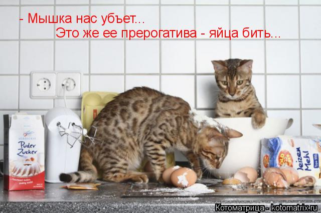Котоматрица: - Мышка нас убъет... Это же ее прерогатива - яйца бить...