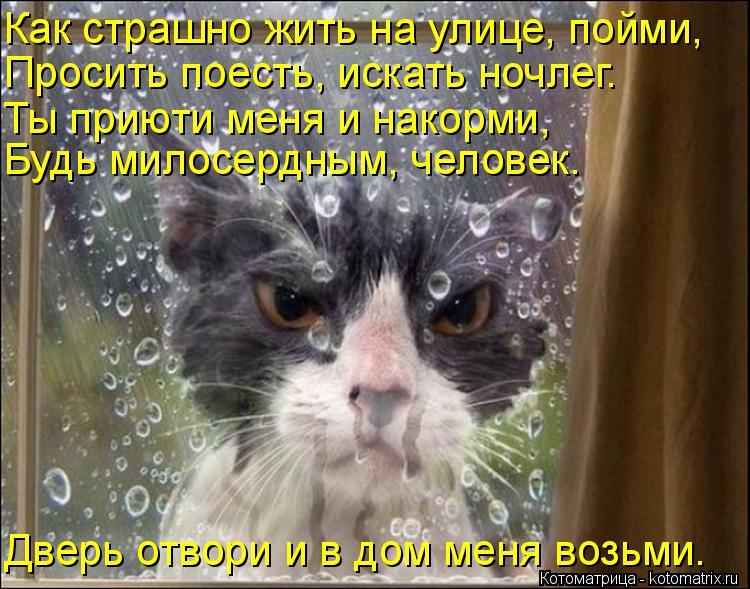 Котоматрица: Как страшно жить на улице, пойми, Просить поесть, искать ночлег. Ты приюти меня и накорми, Будь милосердным, человек. Дверь отвори и в дом мен