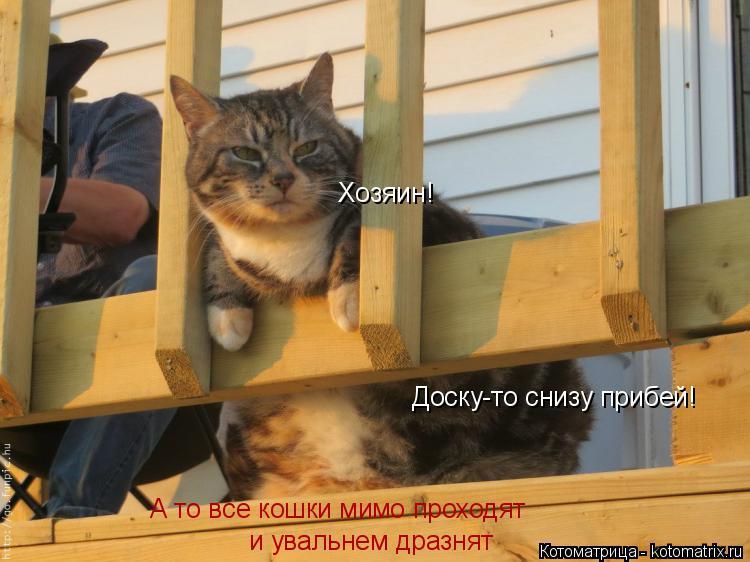 Котоматрица: Хозяин! Доску-то снизу прибей! А то все кошки мимо проходят  и увальнем дразнят