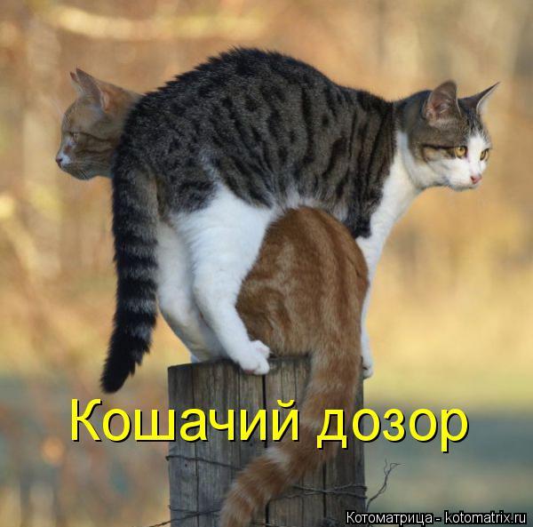 Котоматрица: Кошачий дозор