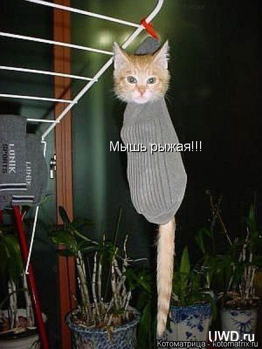 Котоматрица: Мышь рыжая!!!