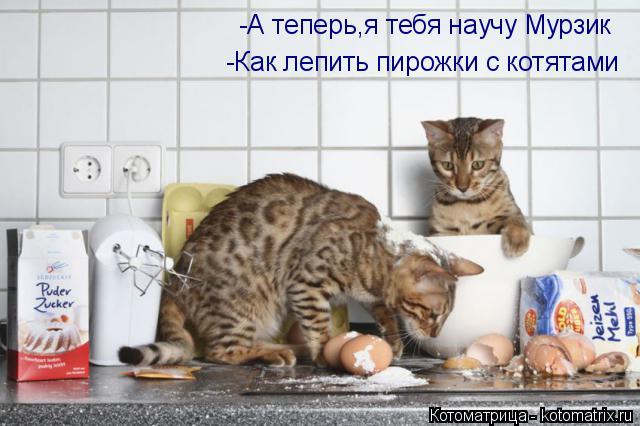 Котоматрица: -А теперь,я тебя научу Мурзик -Как лепить пирожки с котятами