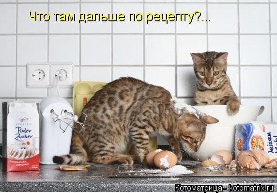 Котоматрица: Что там дальше по рецепту?...