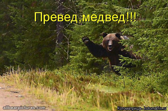 Котоматрица: Превед,медвед!!!