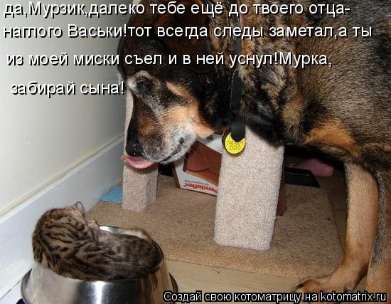 Котоматрица: наглого Васьки!тот всегда следы заметал,а ты  из моей миски съел и в ней уснул!Мурка, да,Мурзик,далеко тебе ещё до твоего отца- забирай сына!