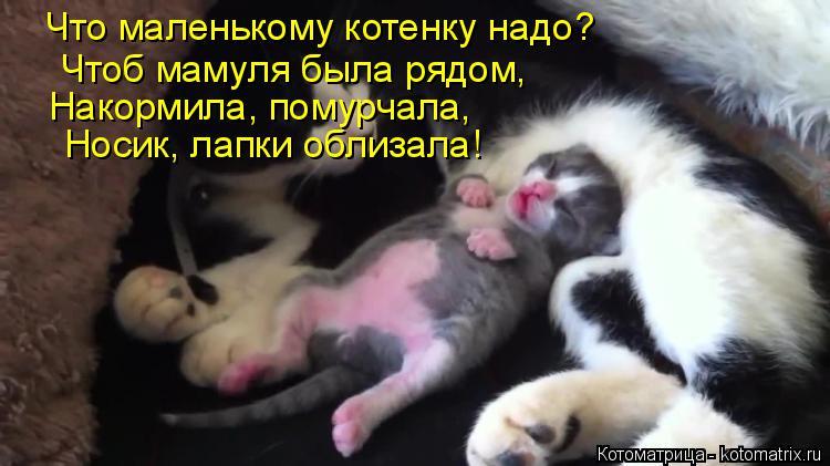 Котоматрица: Что маленькому котенку надо? Чтоб мамуля была рядом, Накормила, помурчала, Носик, лапки облизала!
