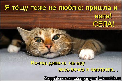 Котоматрица: весь вечер я смотрела... Из-под дивана  на еду Я тёщу тоже не люблю: пришла и   СЕЛА! нате!