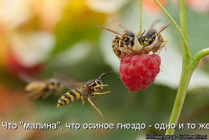 """Котоматрица: Что """"малина"""", что осиное гнездо - одно и то же..."""