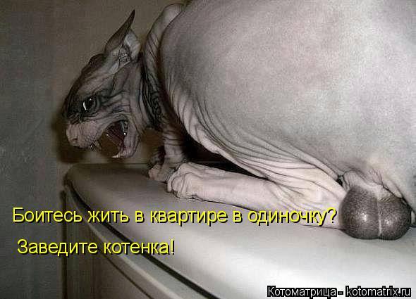 Котоматрица: Боитесь жить в квартире в одиночку?  Заведите котенка!