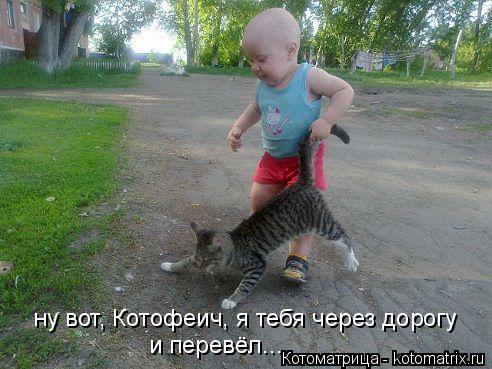 Котоматрица: ну вот, Котофеич, я тебя через дорогу и перевёл...