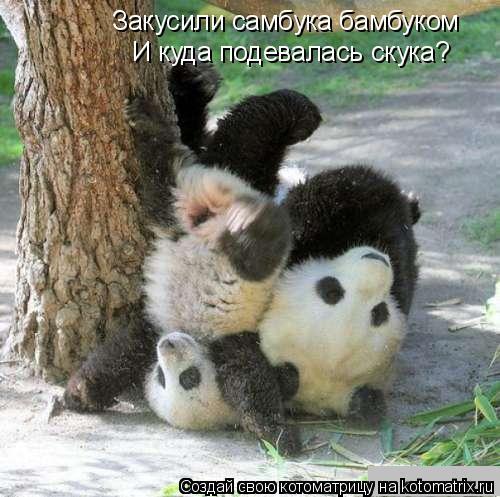 Котоматрица: Закусили самбука бамбуком И куда подевалась скука?
