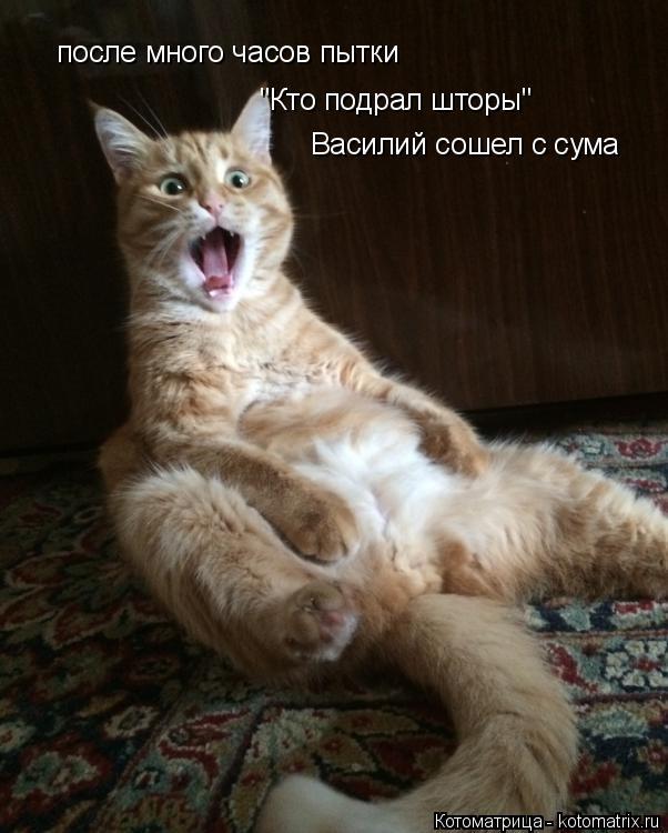 """Котоматрица: после много часов пытки  """"Кто подрал шторы"""" Василий сошел с сума"""