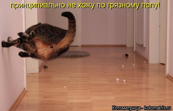 Котоматрица: принципиально не хожу по грязному полу!