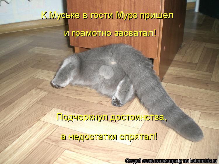 Котоматрица: Подчеркнул достоинства, а недостатки спрятал! К Муське в гости Мурз пришел и грамотно засватал!