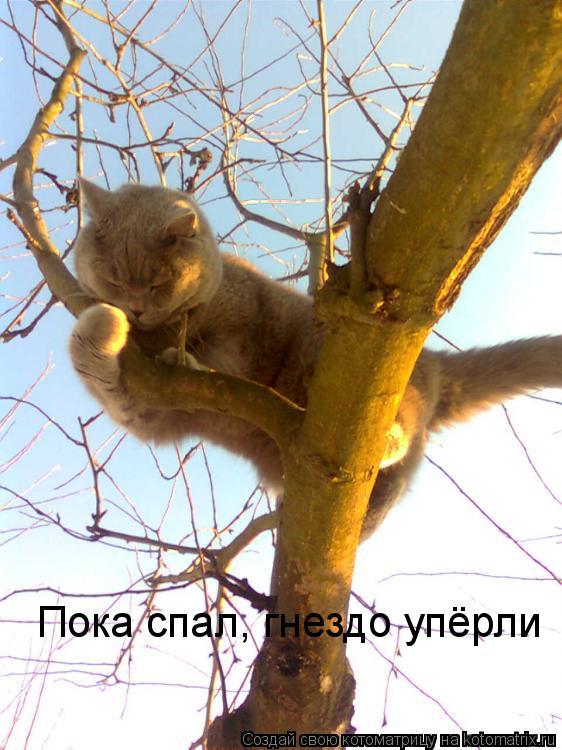 Котоматрица: Пока спал, гнездо упёрли