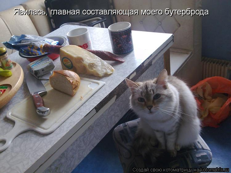 Котоматрица: Явилась, главная составляющая моего бутерброда