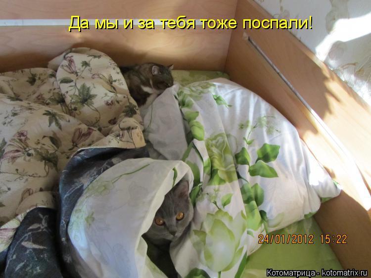 Котоматрица: Да мы и за тебя тоже поспали!