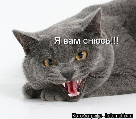 Котоматрица: Я вам снюсь!!!