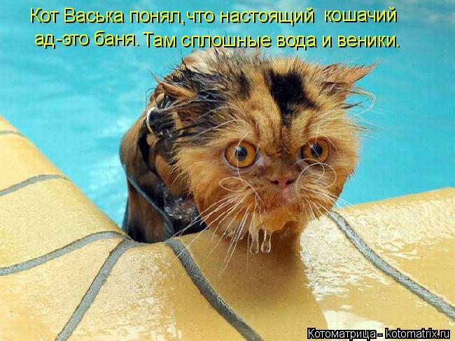 Котоматрица: Кот Васька понял, что настоящий  кошачий ад-это баня. Там сплошные вода и веники.