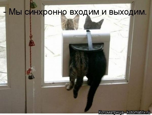 Котоматрица: - Мы синхронно входим и выходим.