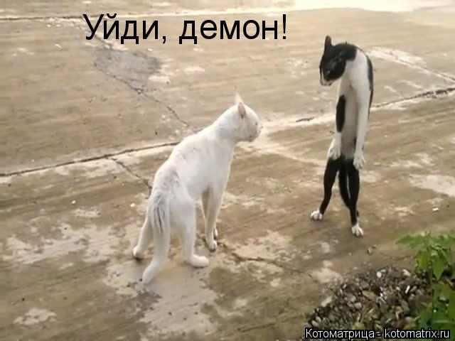 Котоматрица: Уйди, демон!