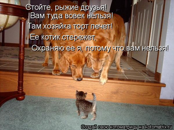 Котоматрица: Стойте, рыжие друзья! Вам туда вовек нельзя! Там хозяйка торт печет! Ее котик стережет, Охраняю ее я, потому что вам нельзя!