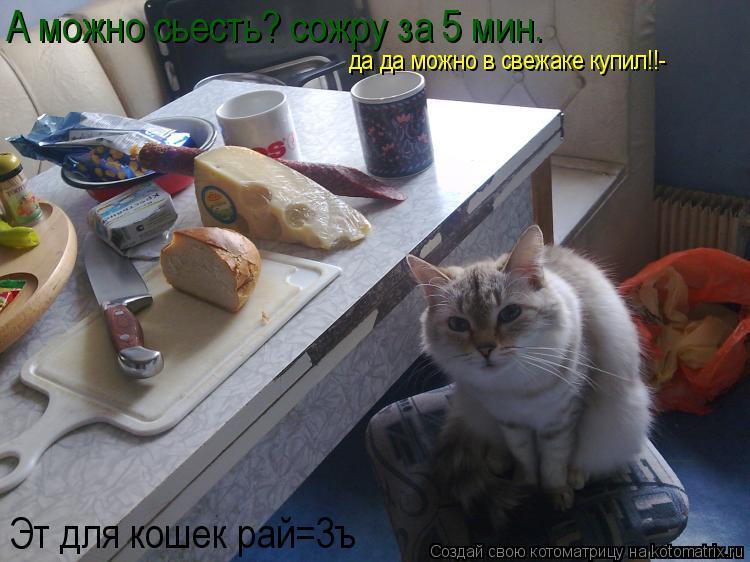 Котоматрица: А можно сьесть? сожру за 5 мин. Эт для кошек рай=3ъ да да можно в свежаке купил!!-