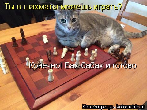 Котоматрица: Ты в шахматы можешь играть? Конечно! Бах-бабах и готово