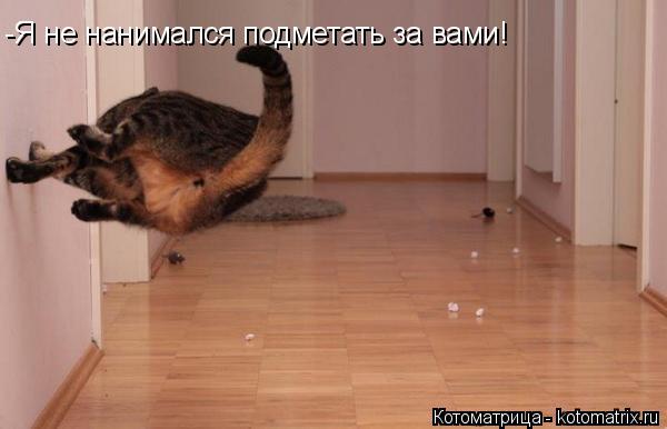 Котоматрица: -Я не нанимался подметать за вами!