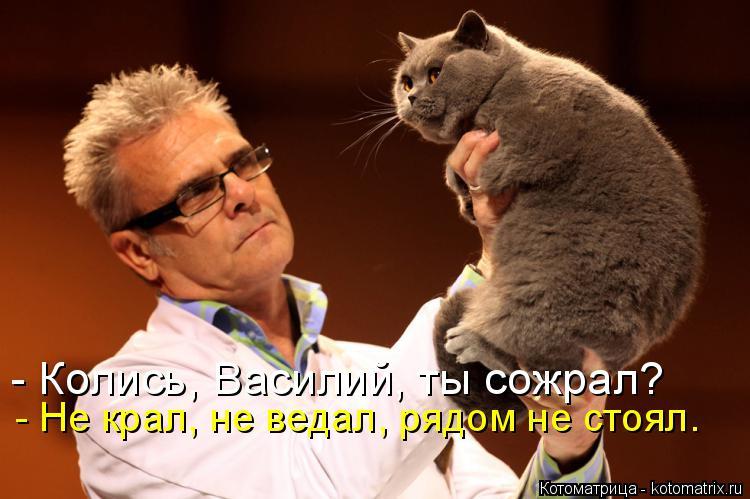 Котоматрица: - Колись, Василий, ты сожрал? - Не крал, не ведал, рядом не стоял.