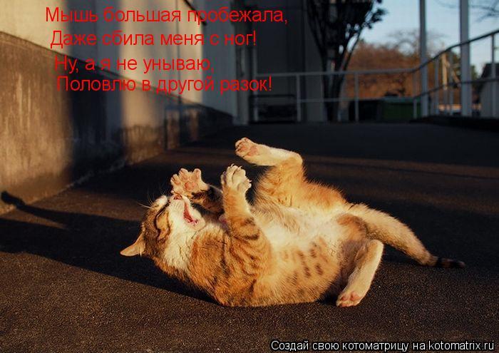 Котоматрица: Мышь большая пробежала, Даже сбила меня с ног! Ну, а я не унываю, Половлю в другой разок!