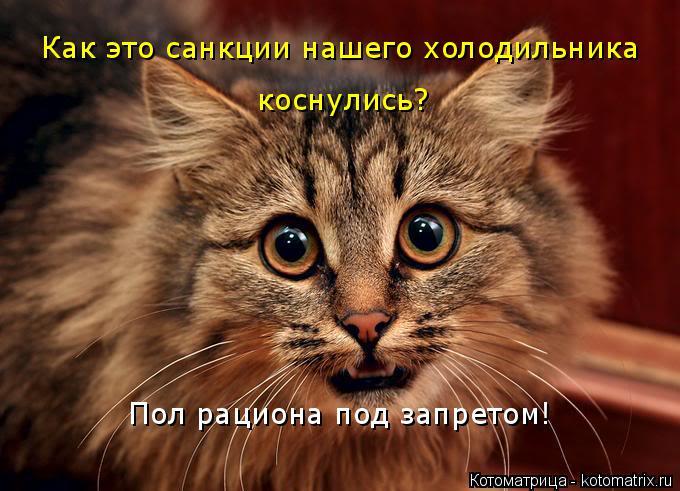 Котоматрица: Как это санкции нашего холодильника  коснулись? Пол рациона под запретом!