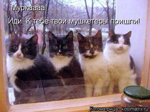 Котоматрица: Муркаааа! Иди! К тебе твои мушкетеры пришли!