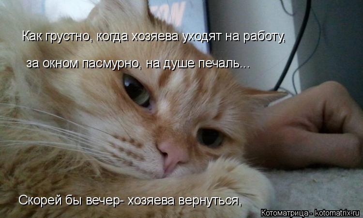 Котоматрица: Как грустно, когда хозяева уходят на работу, за окном пасмурно, на душе печаль... Скорей бы вечер- хозяева вернуться, Скорей бы вечер- хозяева