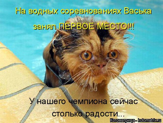 Котоматрица: На водных соревнованиях Васька занял ПЕРВОЕ МЕСТО!!! У нашего чемпиона сейчас  столько радости...