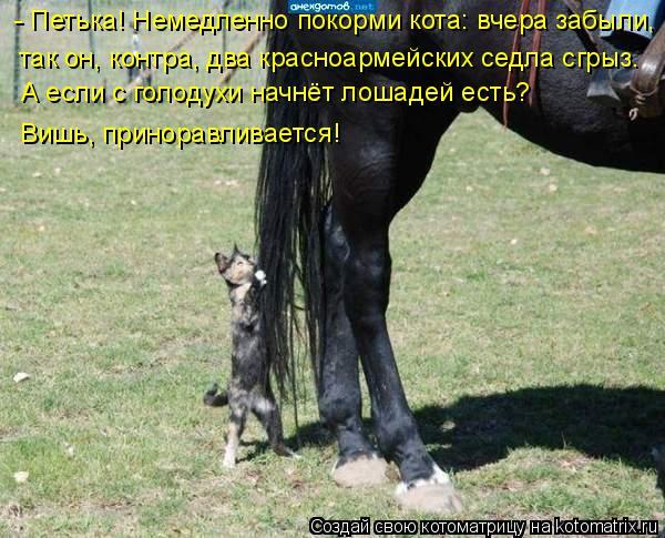 Котоматрица: - Петька! Немедленно покорми кота: вчера забыли, так он, контра, два красноармейских седла сгрыз. А если с голодухи начнёт лошадей есть?  Вишь,