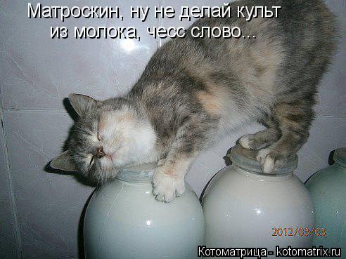 Котоматрица: Матроскин, ну не делай культ из молока, чесс слово...