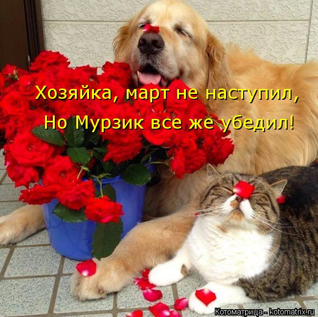 Котоматрица: Хозяйка, март не наступил, Но Мурзик все же убедил!