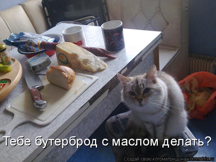 Котоматрица: Тебе бутерброд с маслом делать?