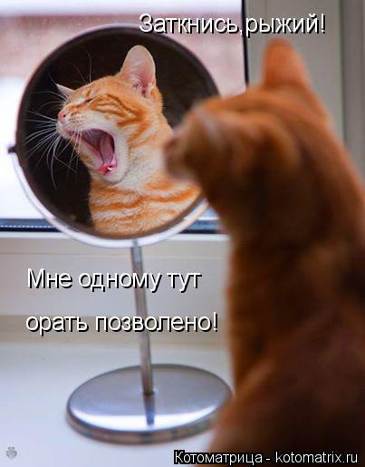 Котоматрица: Заткнись,рыжий! Мне одному тут орать позволено!