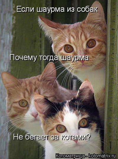 Котоматрица: Если шаурма из собак Почему тогда шаурма Если шаурма из собак Не бегает за котами?