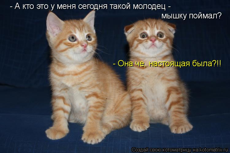 Котоматрица: -  - А кто это у меня сегодня такой молодец - мышку поймал? - Она че, настоящая была?!!
