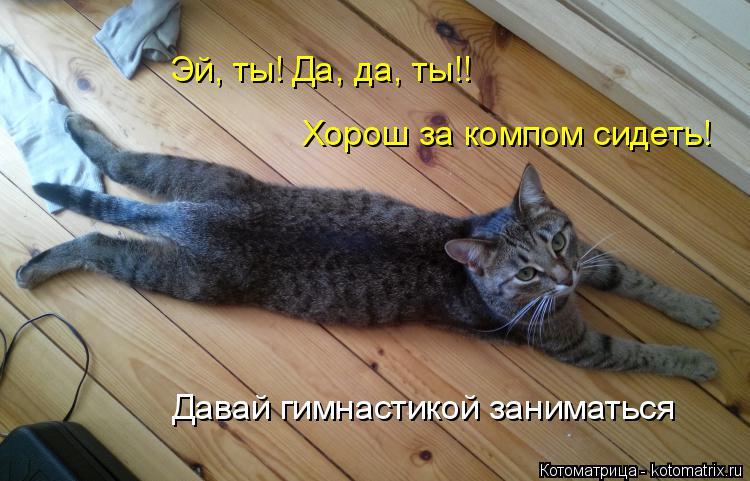 Котоматрица: Эй, ты! Да, да, ты!! Хорош за компом сидеть! Давай гимнастикой заниматься