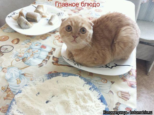 Котоматрица: Главное блюдо