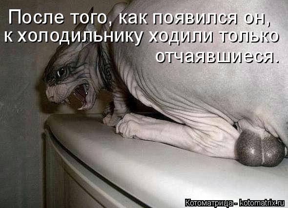 Котоматрица: к холодильнику ходили только После того, как появился он,   отчаявшиеся.
