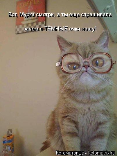 Котоматрица: Вот, Мурка смотри, а ты еще спрашивала  зачем я ТЁМНЫЕ очки нашу!