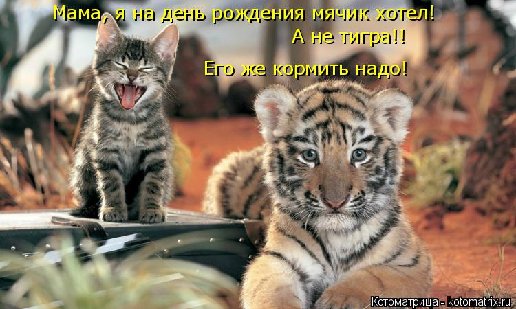 Котоматрица: Его же кормить надо! Мама, я на день рождения мячик хотел! А не тигра!!