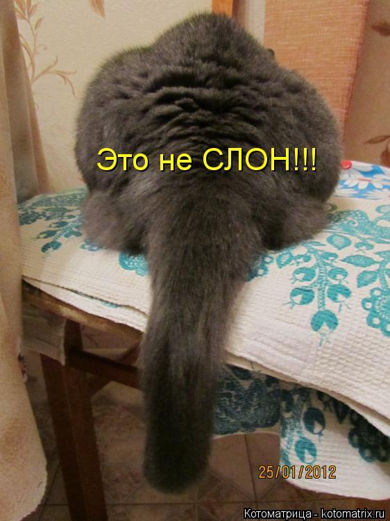 Котоматрица: Это не СЛОН!!!