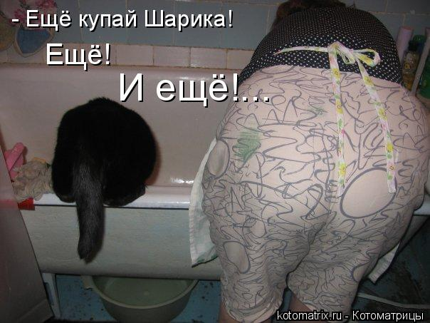 Котоматрица: - Ещё купай Шарика!  И ещё!... Ещё!