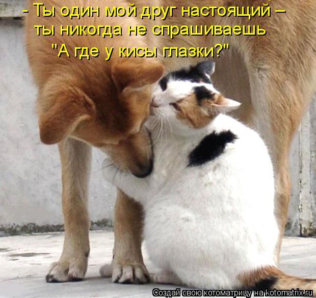 """Котоматрица: - Ты один мой друг настоящий – ты никогда не спрашиваешь """"А где у кисы глазки?"""""""